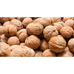Nueces c/ cáscara 30/32 10kg- $70 x kg